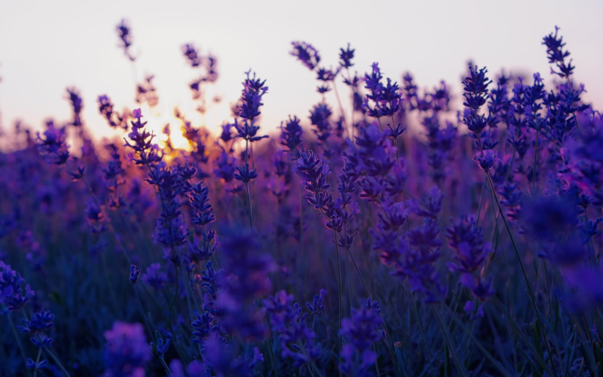 Beautiful purple flowers wallpaper images beautiful purple flowers wallpaper images izmirmasajfo